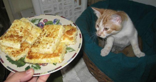 tofu cat
