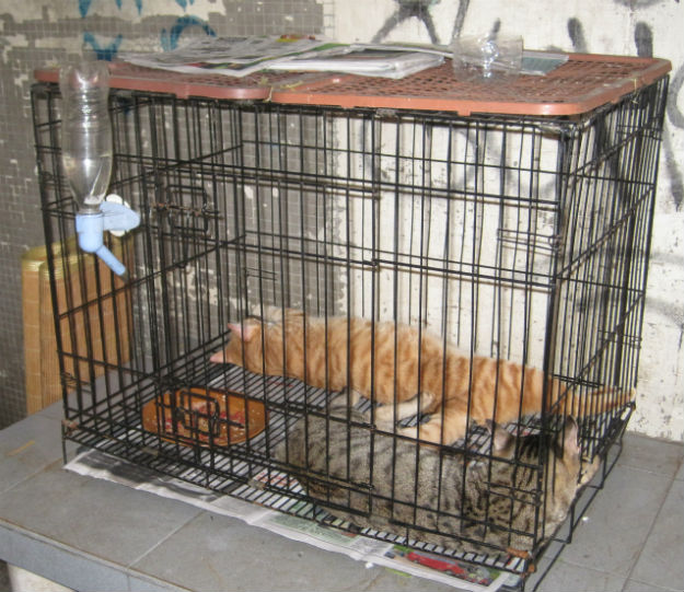caged cats