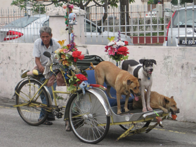 dog rickshaw