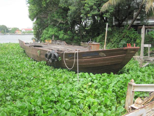 bkk boat hyacinth