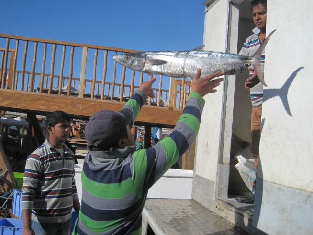 oman throwing fish