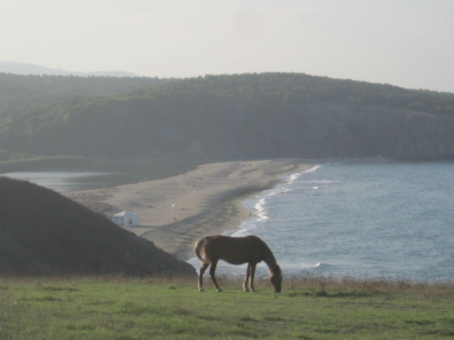veleka beach horse