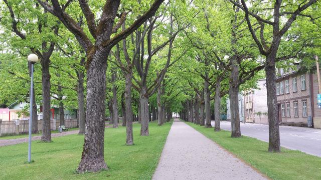 parnu trees